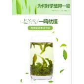 贵州原生态高原绿茶 贵州毛峰