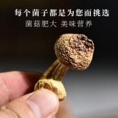云南特产航旅姬松茸