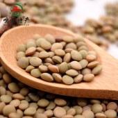 农家 小扁豆