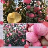 沂源红富士苹果70#
