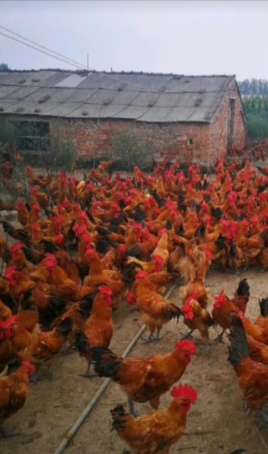 金寨县禾畜家庭农场