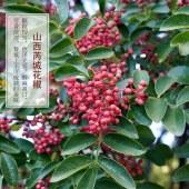 大红袍花椒粉