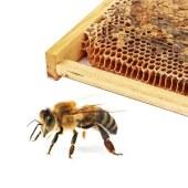 淮蜂仙-蜂巢素